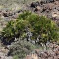 Famille - Arecaceae