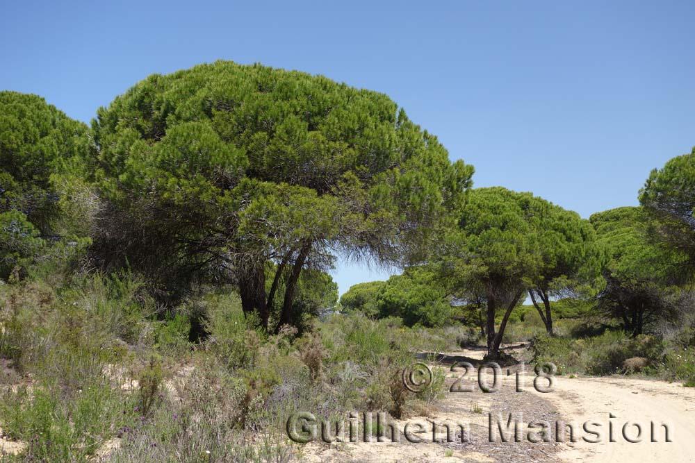 Andalousie - Huelva