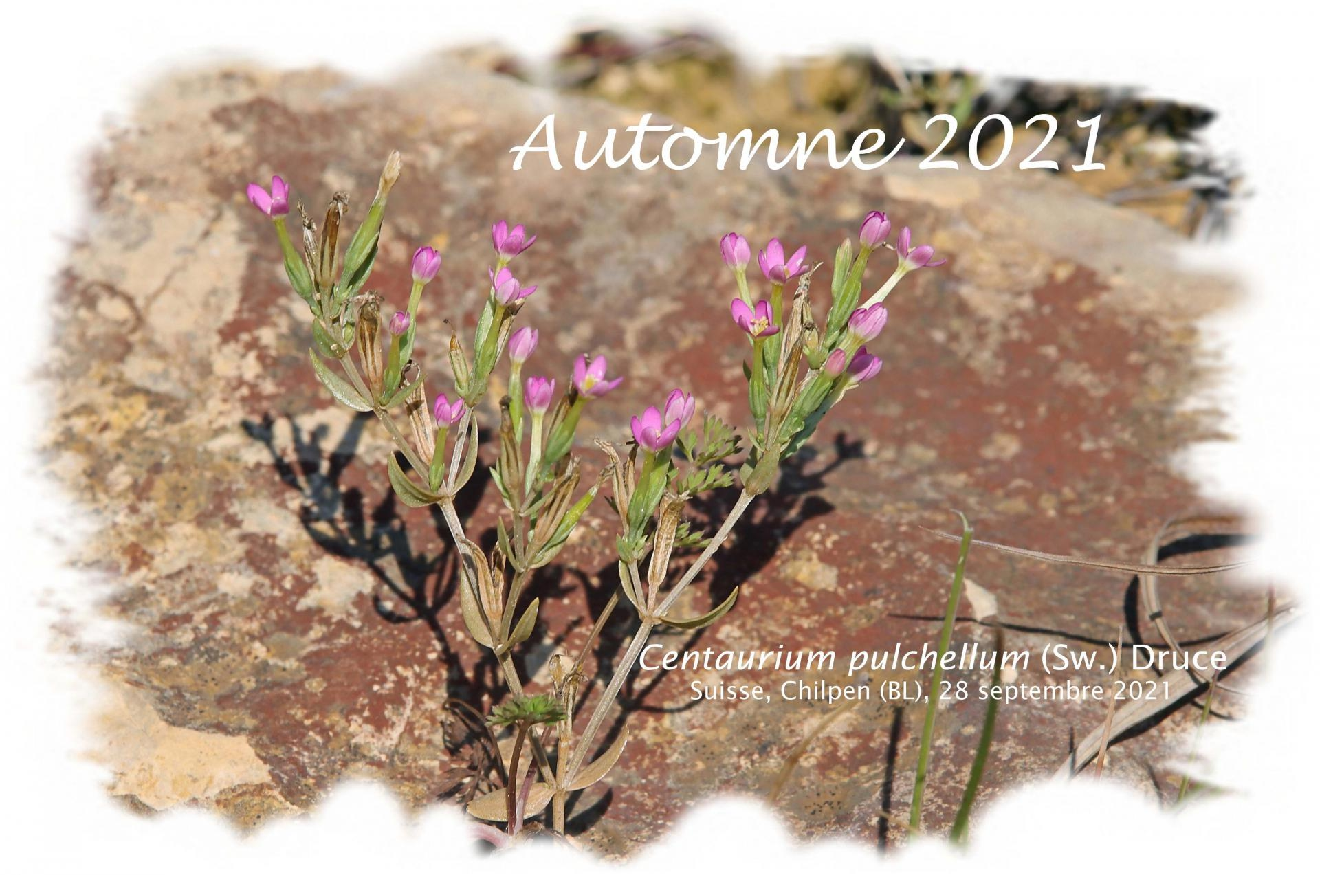 Automne 2021 red