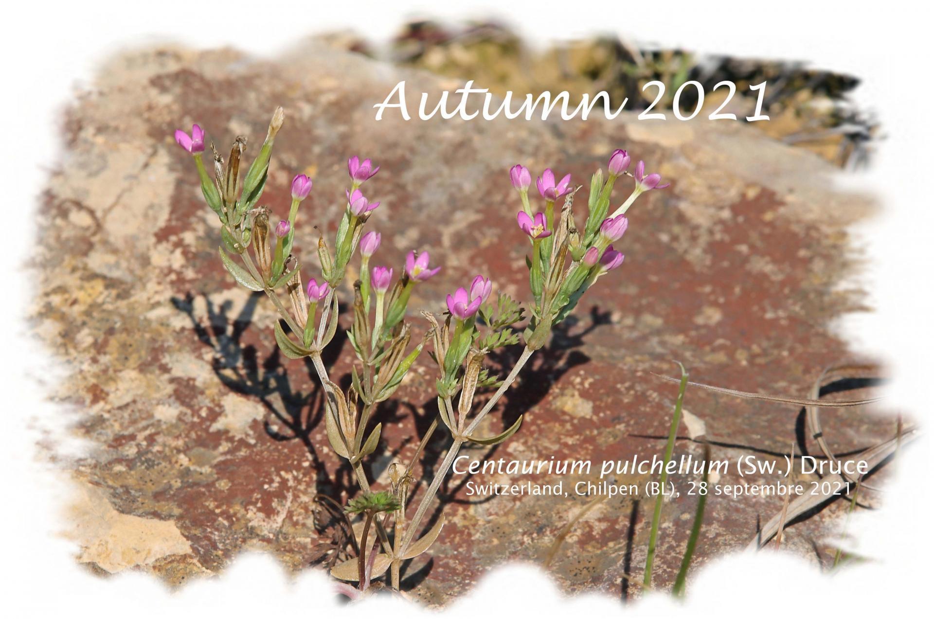 Autumn 2021 red